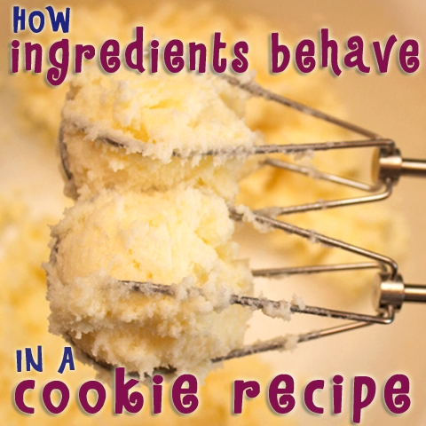 Cookie Decorating – How Ingredients Behave In A Cookie Recipe